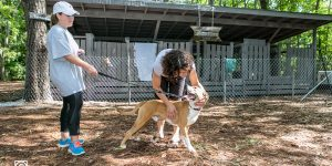 LaunchSAVANNAH Volunteers at Local Pet Rescue