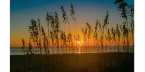 Visit Tybee Releases Redesigned E-marketing Newsletter