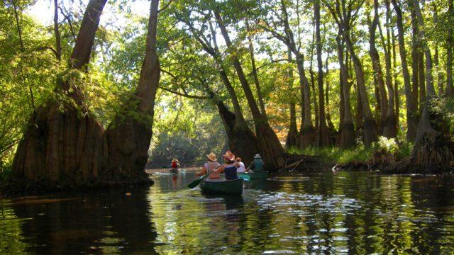 Wilderness Savannah