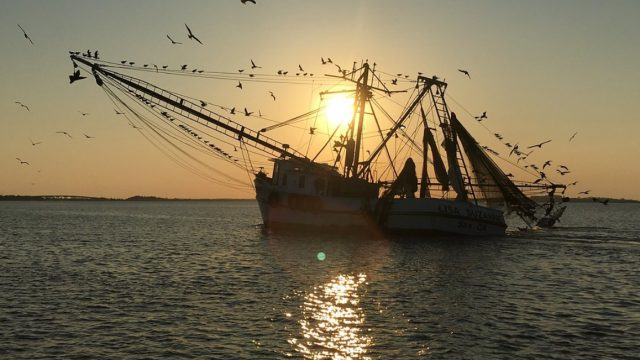 Shrimp Boat In The Sunet