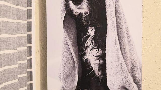 Puppy Bath Canvas