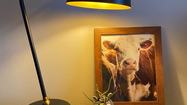 Morning Cow Photo Print